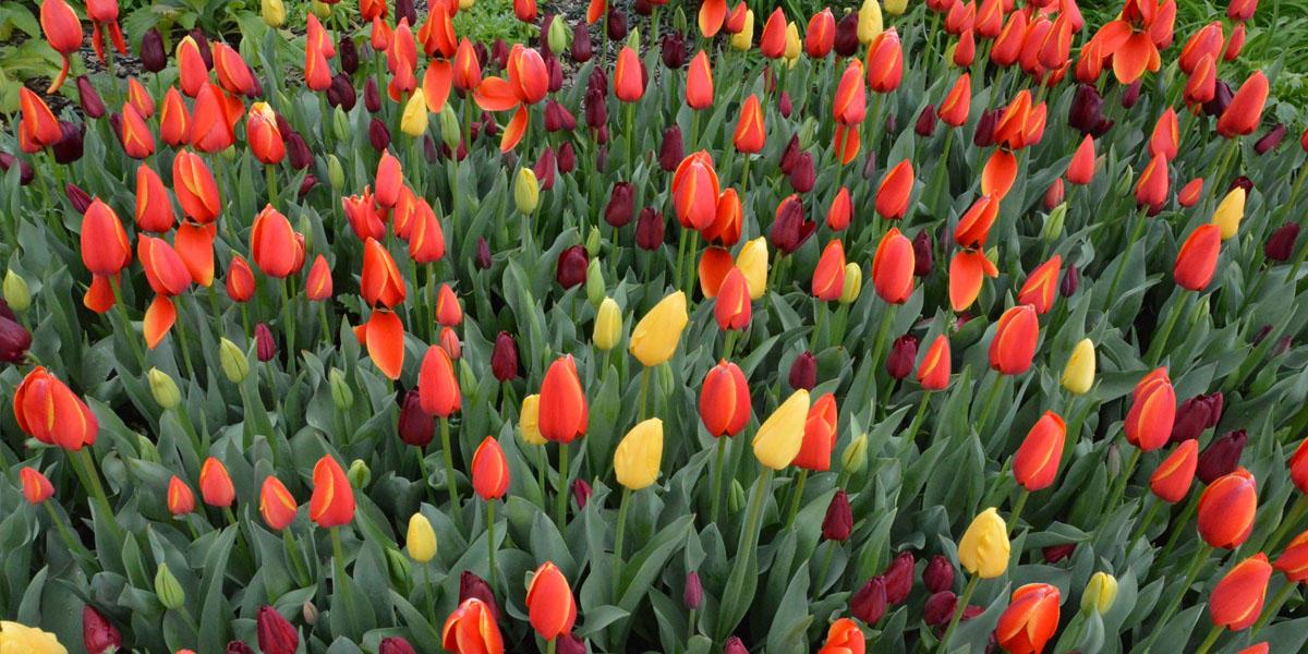 Atlanta Blooms at the Atlanta Botanical Gardens