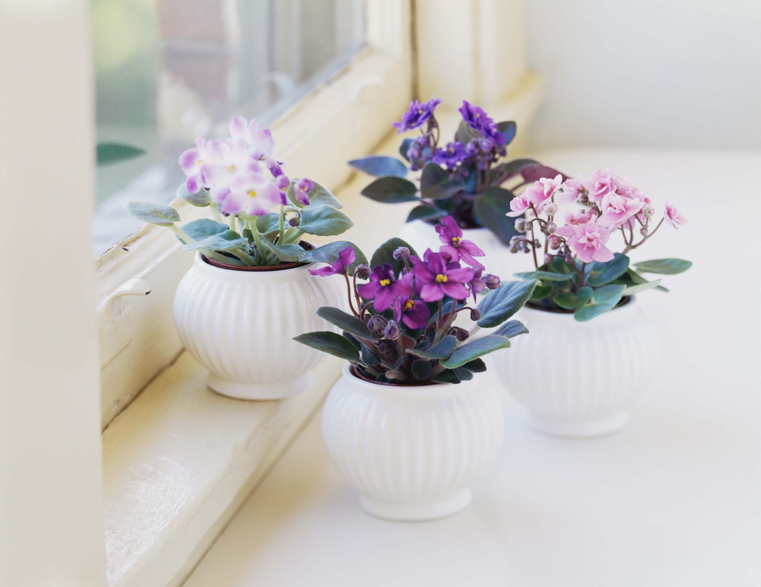 easy to maintain houseplants
