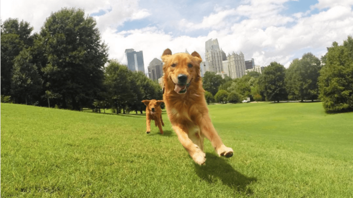 Piedmont Park Dog Parks Doggie Dash 5K