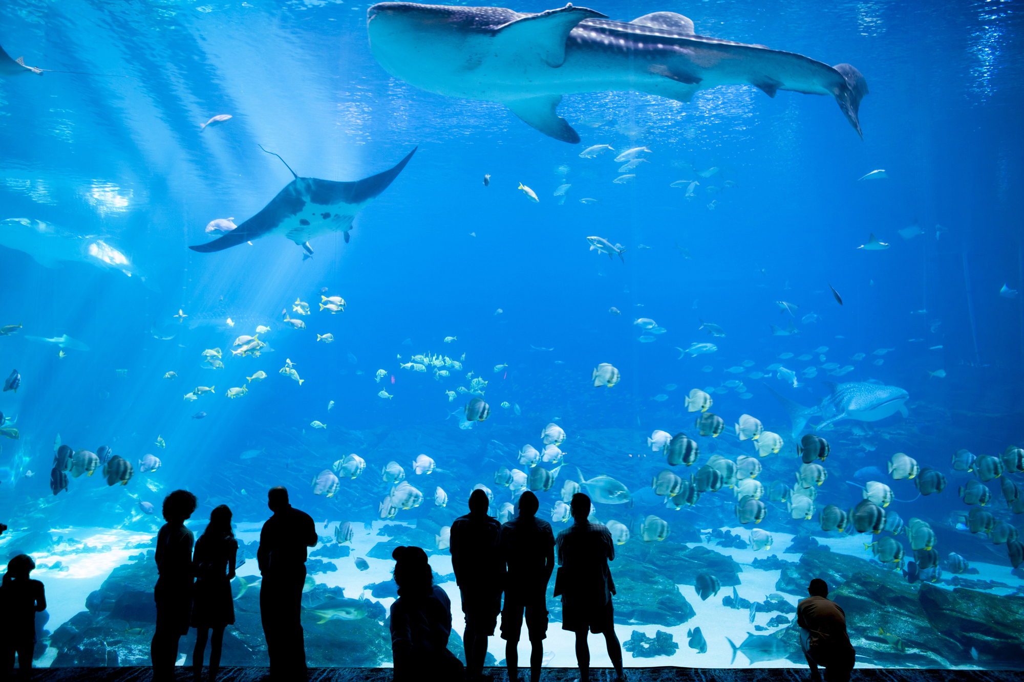 The Georgia Aquarium in Atlanta